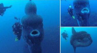 Στην Πορτογαλία βρέθηκε το μεγαλύτερο και βαρύτερο οστεώδες ψάρι στον κόσμο. (Βίντεο)