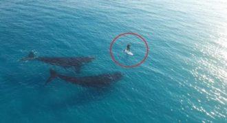 Στην αρχή νόμιζα ότι απλά κάνει σανίδα στην θάλασσα ΜΟΝΟΣ του. Μετά όμως είδα και ΑΥΤΟ!