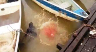 Τρόμος:Του έπεσε το φαγητό στο Νερό. Αυτό που έγινε μέσα σε Δευτερόλεπτα; Δεν το περίμενε Κανείς…