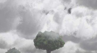 Το δέντρο που… επιστρέφει (βίντεο)