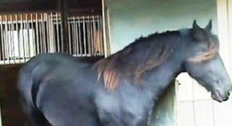Δεν φαντάζονταν τι συμβαίνει όταν κάθε βράδυ τα άλογα έφευγαν από το στάβλο! [video]
