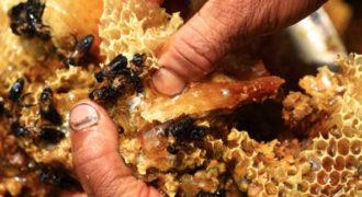 Πως φτιάχνεται το μέλι;
