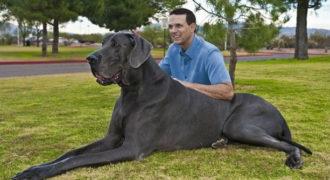 Ο ψηλότερος σκύλος του κόσμου