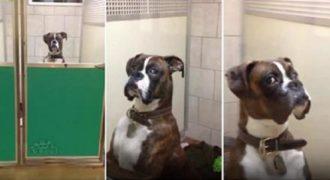 Το βλέμμα αυτού του σκύλου που πήγε στον κτηνίατρο τα λέει όλα. (Βίντεο )
