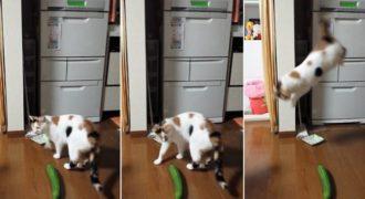 Γιατί οι γάτες νιώθουν έναν απελπιστικό τρόμο όταν αντικρίζουν αγγούρια; Ξεκαρδιστικό Βίντεο