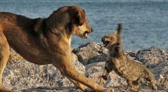 Γάτα με «αυτοθυσία» σώζει αγοράκι από τα δόντια σκύλου (Βίντεο)
