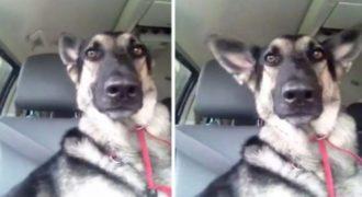 Δείτε την ξεκαρδιστική αντίδραση αυτού του σκύλου όταν ακούει το αγαπημένο του τραγούδι!