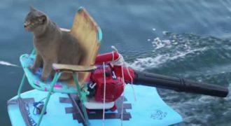 Γάτος κάνει βόλτα με ένα αυτοσχέδιο «τζετ σκι» για να πάρει πίσω την τροφή