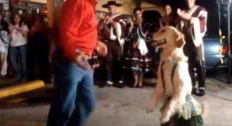 Απίστευτο Βίντεο! Χορεύοντας με τον πιο έξυπνο σκύλο !