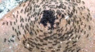 Απίστευτο!Τι συμβαίνει άμα βάλετε σε μυρμήγκια να ακούσουν Slayer; (Βίντεο)
