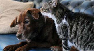 Τυφλός σκύλος βλέπει με τα… μάτια γάτας!