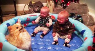 Δίδυμα μπαίνουν στην πισίνα, με τον σκύλο τους! Η αντίδρασή τους; Θα σας φτιάξει τη διάθεση.
