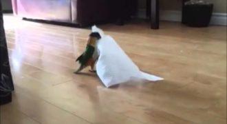Αυτό που κάνει αυτός ο παπαγάλος με το χαρτί κουζίνας είναι σκέτη απόλαυση!