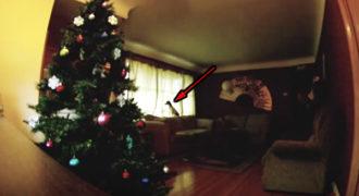 Άτακτος σκύλος μόνος στο σπίτι! Δείτε τι έδειξε η κρυφή κάμερα!