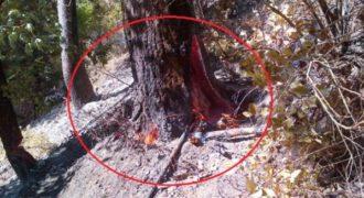 Αυτό που βρήκαν σε δέντρο στο δάσος θα σας έκανε να μην πάτε σε δάσος ποτέ