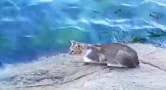 Αυτός ο γάτος πηγαίνει προς το νερό πολύ αργά. Τι κάνει μετά; Κάνει όλους να γελάσουν