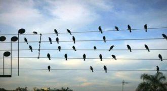 Απίθανο Βίντεο! Συνέθεσε Μουσική αποτυπώνοντας τις θέσεις των Πουλιών πάνω στα καλώδια με νότες! Δείτε το αποτέλεσμα!