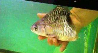 Το… μισό ψάρι που επιβίωσε για έξι μήνες! (Βίντεο)
