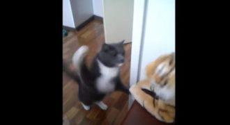 Τη μισεί και φαίνεται – Γάτα… δέρνει λούτρινη τίγρη! (Video)