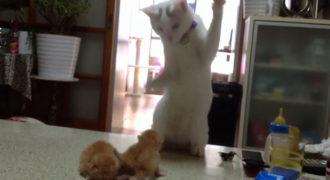 Γάτα μαθαίνει σε γατάκια τα μυστικά της μάχης (Video)