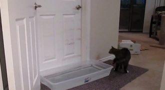 Επειδή ο γάτος τους άνοιγε συνέχεια τις πόρτες έβαλαν μπροστά μια λεκάνη με νερό. Το αποτέλεσμα ΔΕΝ το φαντάζεστε!