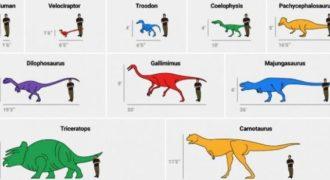 Βίντεο: Τελικά πόσο μεγάλοι ήταν οι δεινόσαυροι; Όχι όσο νομίζουμε !