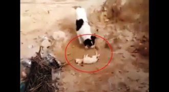 Συγκλονιστικό βίντεο : Σκυλίτσα θάβει το νεκρό της κουτάβι!(Βίντεο)