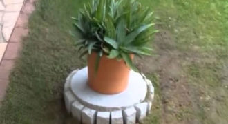 Τι κρύβεται κάτω από αυτή την γλάστρα στον κήπο; (Video)