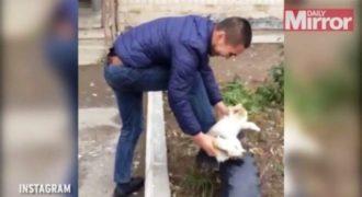 Το βίντεο που σόκαρε το διαδίκτυο – Δείτε τι κάνει αυτός ο άντρας σε μία ανυποψίαστη γάτα (Βίντεο)
