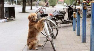 Απίστευτο! Σκύλος φυλάει το ποδήλατο του ιδιοκτήτη του και ΔΕΙΤΕ ΤΙ ΚΑΝΕΙ ΣΤΟ ΤΕΛΟΣ(Βίντεο)