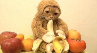 Τον γύρω του διαδικτύου κάνει η γάτα ντυμένη μαϊμού που τρώει μια μπανάνα. (Βίντεο)