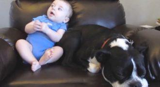 Ο μπέμπης τα έκανε πάνω του και μόλις το αντιλαμβάνεται ο σκύλος, η αντίδραση του είναι απίστευτα ξεκαρδιστική