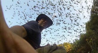 Εκατομμύρια νυχτερίδες εγκαταλείπουν μια σπηλιά ταυτόχρονα (Video)