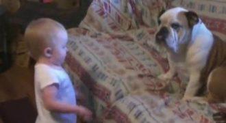Ένα Μωρό μάλωσε το μπουλντόγκ και το σκυλί χάνει τη θέληση για ζωή (Βίντεο)