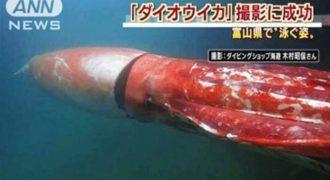 Γιγάντιο καλαμάρι κολυμπά στις ακτές της Ιαπωνίας [Βίντεο]