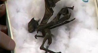 Συγκλονιστικό φτερωτό πλάσμα βρέθηκε στο Μεξικό … φοβερό!!! (ΒΙΝΤΕΟ)