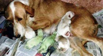Σκυλίτσα γέννησε πράσινα κουτάβια στην Ισπανία (βίντεο)
