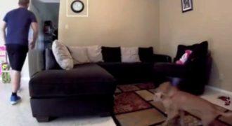 Τοποθέτησε μια κάμερα για να δει τι κάνουν τα σκυλιά του όταν λείπει. Ούτε ο ίδιος δεν περίμενε αυτό που είδε!