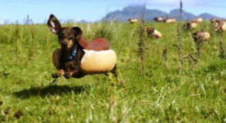 Η Heinz επιστρατεύει χαριτωμένα σκυλάκια για την πολύ έξυπνη διαφήμισή της.