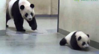Μαμά – Πάντα υποχρεώνει το παιδί της να γυρίσει στο κρεβάτι του! (Βίντεο)