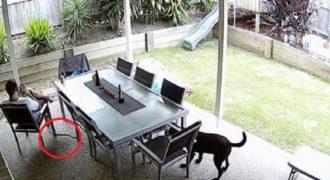 Σκύλος «έσωσε» ιδιοκτήτη προειδοποιώντας τον για την προσέγγιση ενός δηλητηριώδους φιδιού.