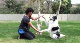 Αυτοί οι σκύλοι έχουν ένα ιδιαίτερο ταλέντο. Από τη στιγμή που ξεκίνησαν, δεν μπορούσα να σταματήσω να τα κοιτάω!