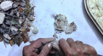 Έτσι γίνεται το παραδοσιακό καθάρισμα της Μαστίχας Χίου
