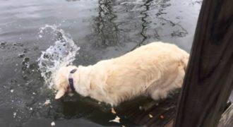 Έξυπνος σκύλος πιάνει ένα ψάρι χρησιμοποιώντας ψωμί για δόλωμα.