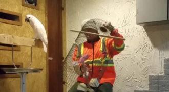 Αυτός ο παπαγάλος βρίζει γιατί του έσπασαν το κλουβί!
