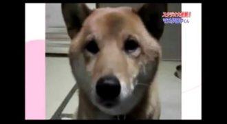 Αυτός ο σκύλος αυξομειώνει το γάβγισμα του μετά από εντολή του αφεντικού του!