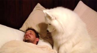 Δεν τον πίστευαν πόσο γλυκά τον ξυπνάει ο σκύλος του κάθε πρωί,ώσπου το έγραψε σε κάμερα!