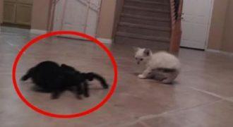 Ήθελε να τρομάξει μια γατούλα με μια αράχνη… αυτό που συνέβη ήταν πολύ αστείο.(Βίντεο)