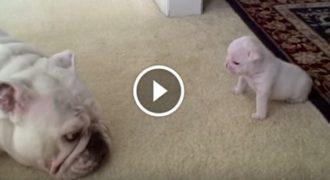 Μαμά δείχνει την Αγάπη της προς το Μικρό της. Η αντίδραση του… Ανεκτίμητη!