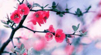 Τα λουλούδια της άνοιξης ανθίζουν σε αυτό το υπέροχο βίντεο!